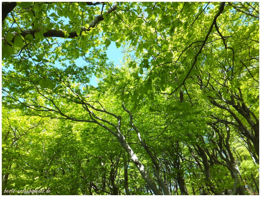 laufen zwischen den Baumkronen
